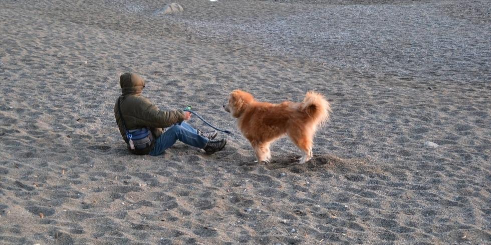 桂浜公園をペット連れで遊ぶ(1)
