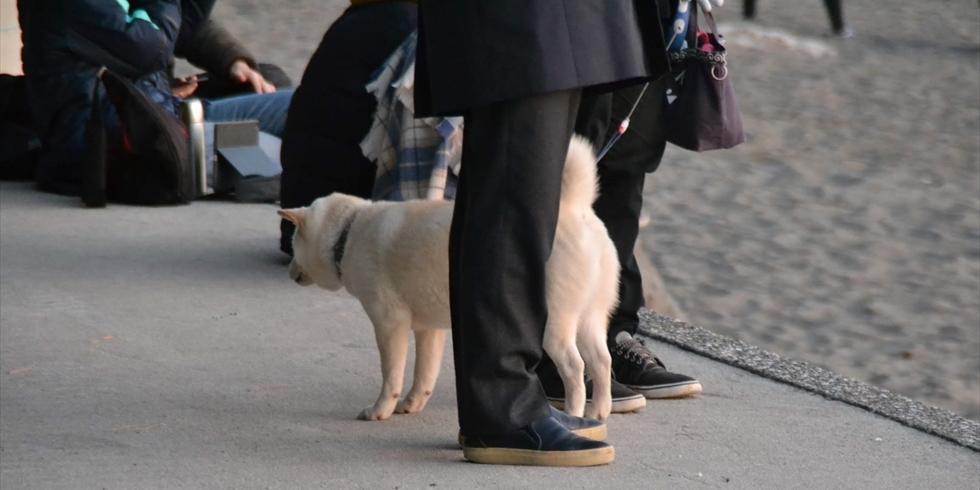 桂浜公園をペット連れで遊ぶ(2)
