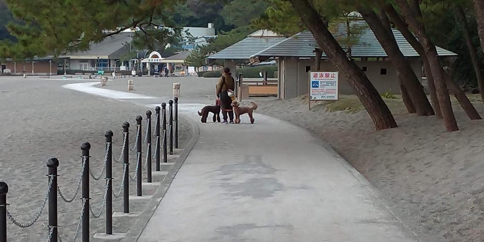 桂浜公園をペット連れで遊ぶ(4)