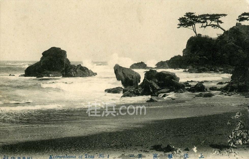 昔の桂浜 (竜王岬を望む2)