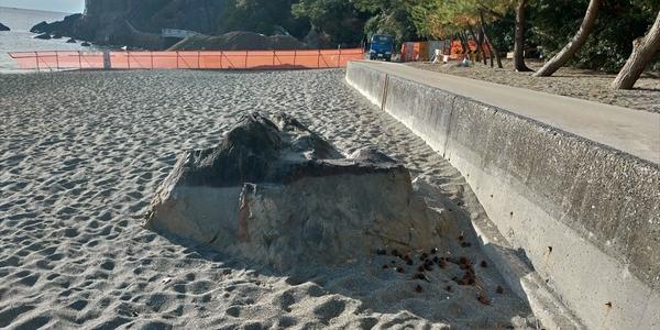 今の桂浜 (竜王岬を望む2)