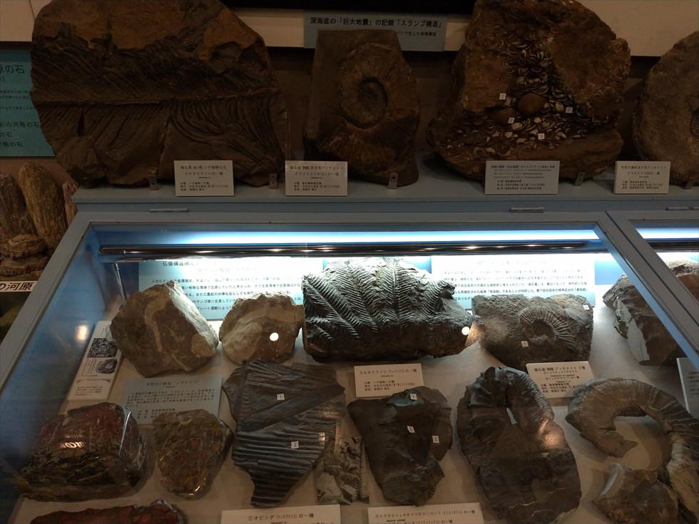 佐川地質館と桂浜の五色の石(高知インター付近の化石)
