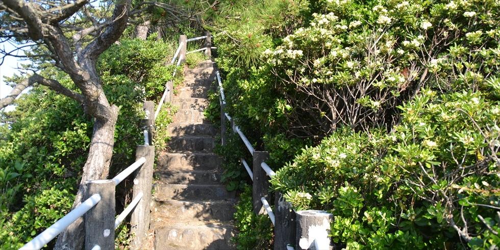 桂浜の野路菊の小径(左から右へ)