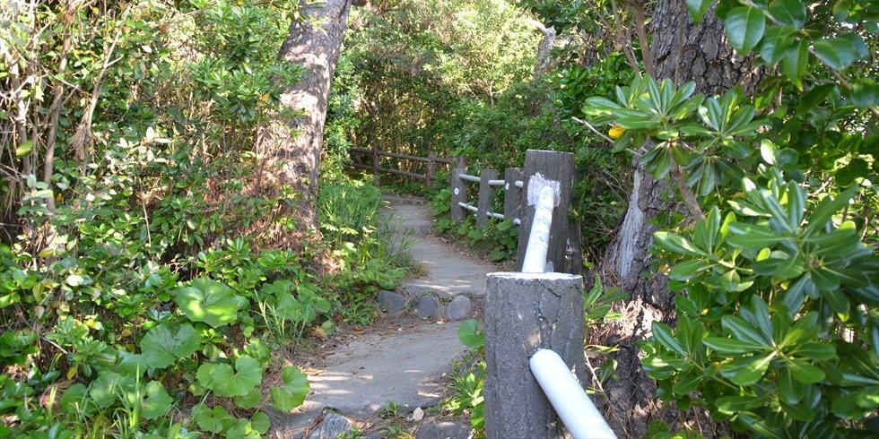 桂浜の野路菊の小径(右から左へ)