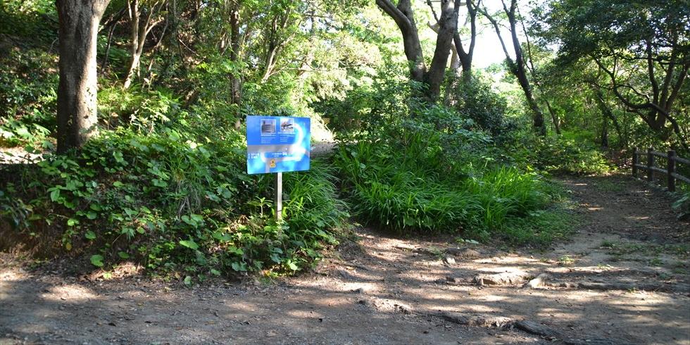 桂浜の野路菊の小径(ゆるやかな階段を登る)