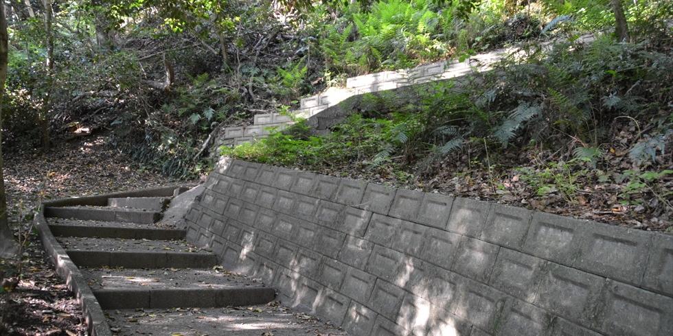 桂浜のうつぎの小径(左から右へ)