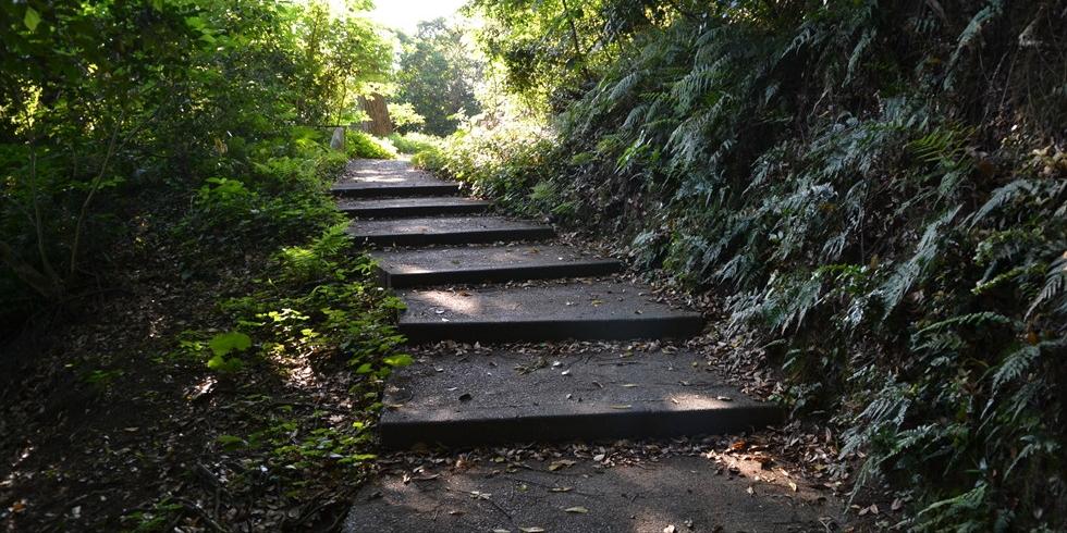 桂浜のうつぎの小径(ゆるやかな階段を登る)