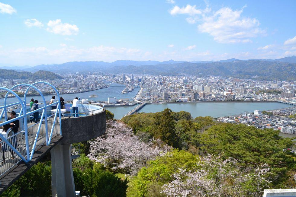 高知市・五台山のサクラ(1)