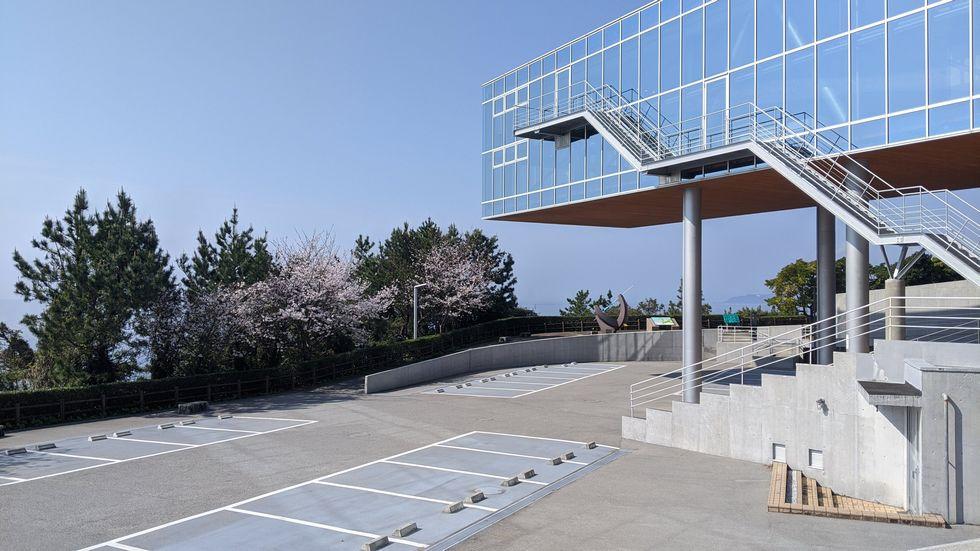 高知市・桂浜のサクラ(4)