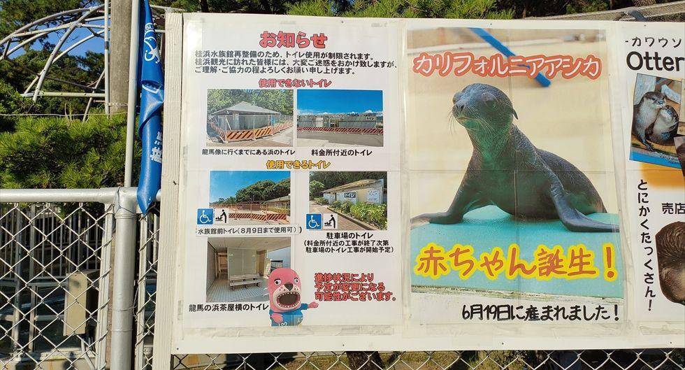 桂浜公園内のトイレをリニューアル(6)